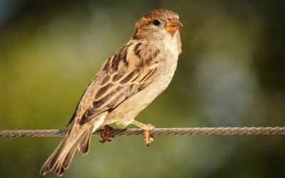 Effect of Mobile Radiation on Birds and the Environment